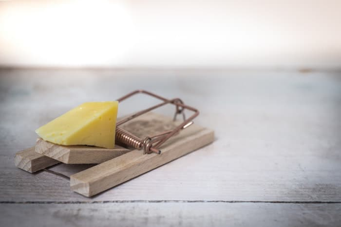 mouse traps that work