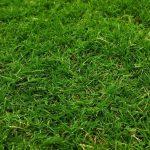 The Best Lawn Edger In Australia For 2021