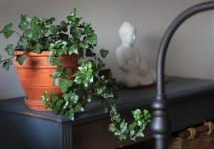 Best Pot for Plants